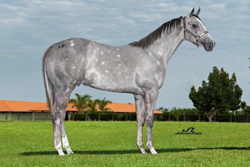 RCH SILVER TWOTWELVE