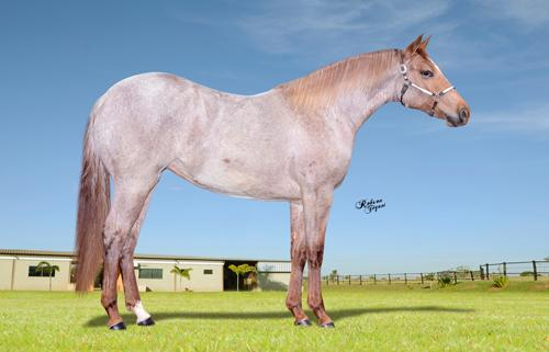 LIL FORTUNE ROAN TLM