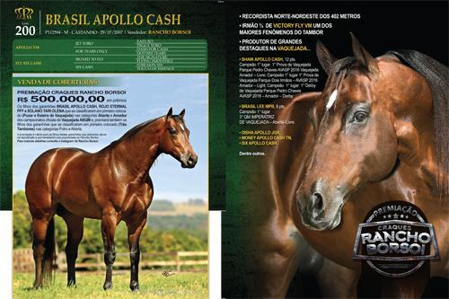 BRASIL APOLLO CASH