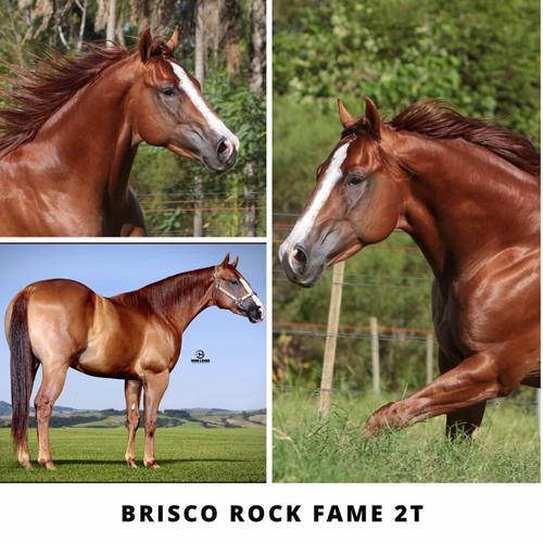 BRISCO ROCK FAME 2T