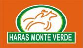Leilão Virtual Haras Monte Verde