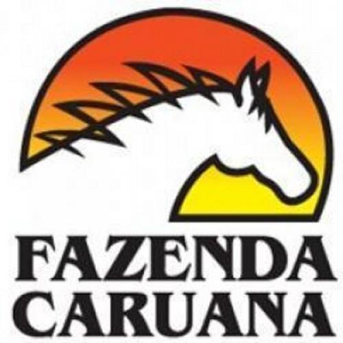 Leilão Virtual Fazenda Caruana