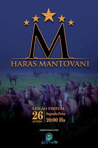 4º Leilão Virtual Haras Mantovani
