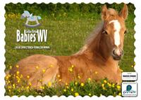 3º Leilão Virtual Babies WV