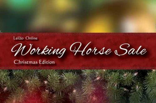 2° Leilão Online Working Horse Sale