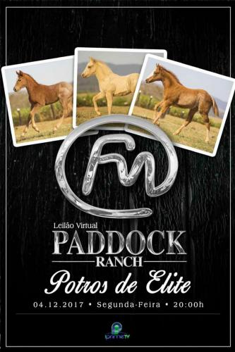 2º Leilão Virtual Paddock Ranch - Babies