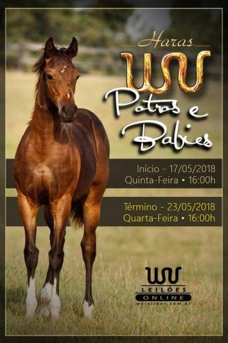 1° Leilão Online Haras WV - Potros e Babies