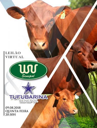 Leilão Virtual Senepol WV & Tufubarina Senepol