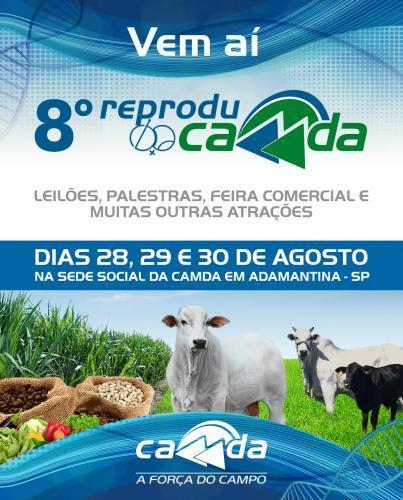 8º Leilão Reproducamda - Leilão de bovinos (fêmeas para reprodução)