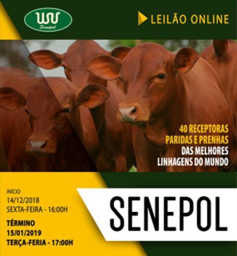 Leilão Online Senepol WV