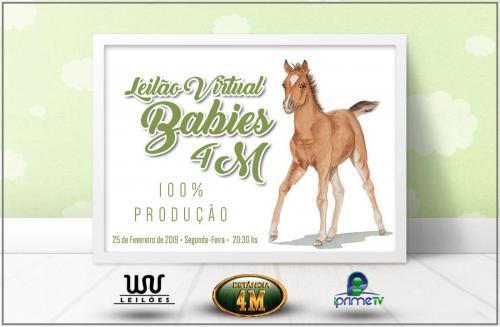 Leilão Virtual Babies 4M - Produção