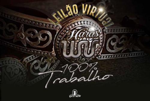 Leilão Virtual Haras WV - 100% Trabalho