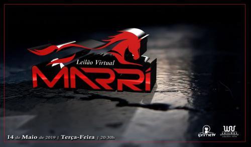 Leilão Virtual André Marri