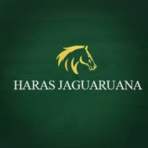 Leilão Virtual Haras Jaguaruana