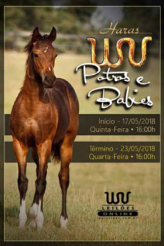 3º Leilão Online Haras WV - Potros e Babys