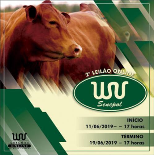 3º Leilão Online WV Senepol
