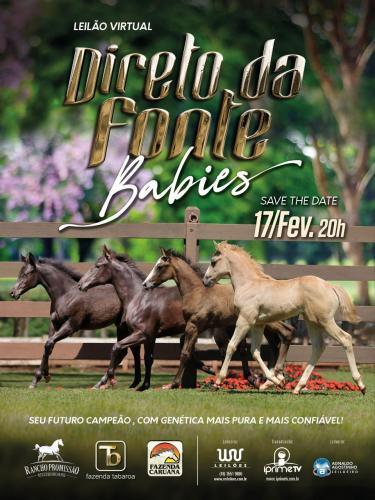 2º Leilão Virtual Direto da Fonte - Babies
