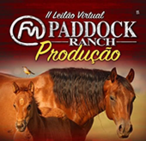 Leilão Paddock Ranch- Potros e Babies