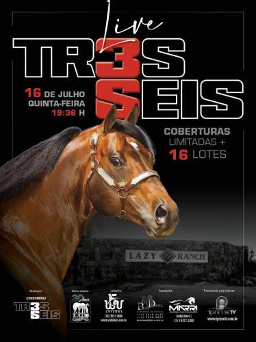 Leilão Live TR3S SEIS