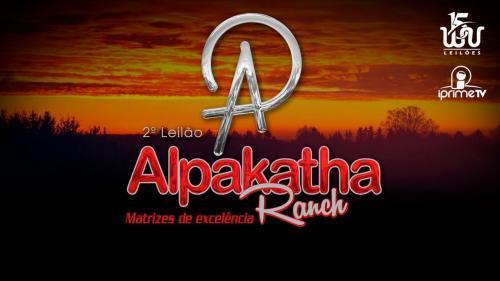 3º Leilão Alpakatha Ranch - Babies e Embriões