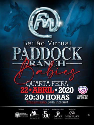 2º Leilão Virtual Paddock Ranch - Potros e Babies