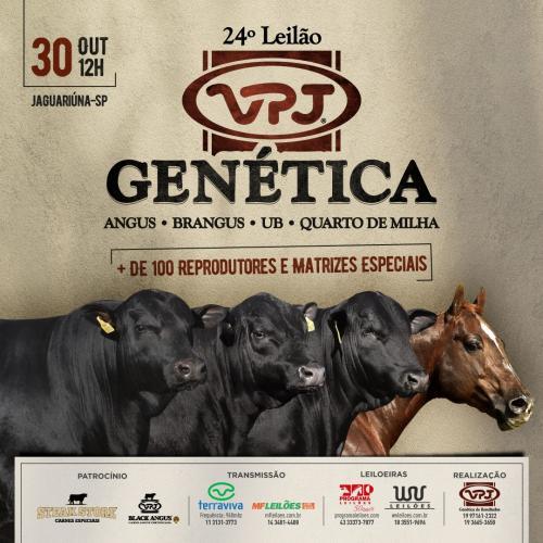 24º Leilão VPJ Genética Quarto de Milha