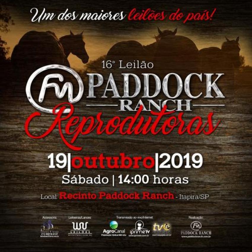 Confira as Fotos - 16º Leilão Paddock Ranch REPRODUTORAS